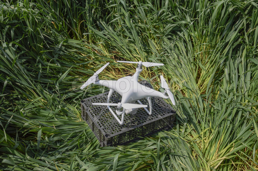 Quadrocopters on a plastic box among the wheat stalks