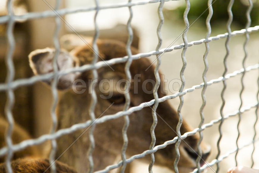 The deer in a cage very much grieves for free life