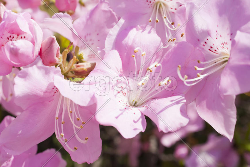 Beautiful spring flowers are pleasing to the eye beauty and tenderness