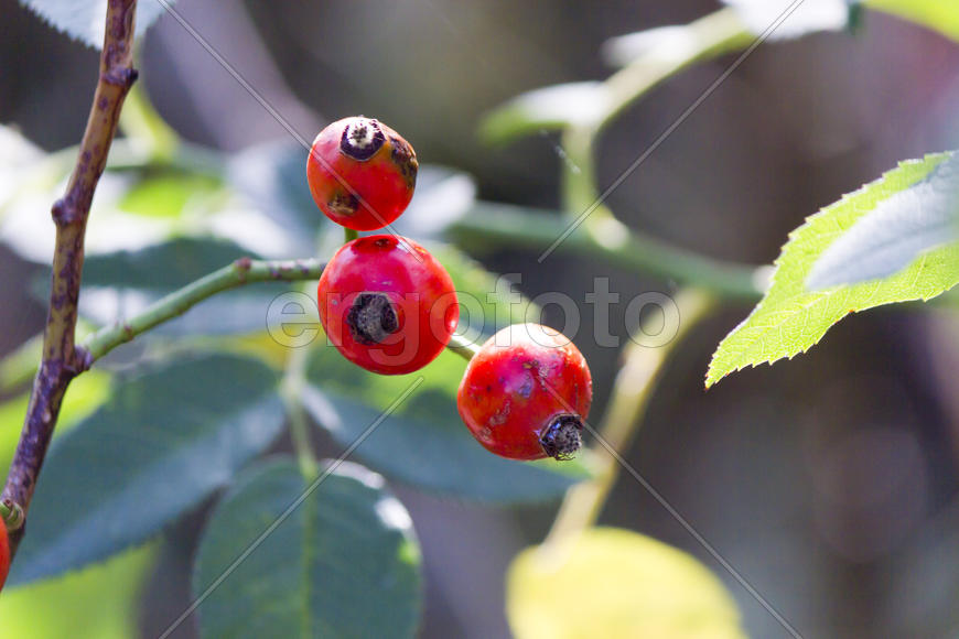 Autumn berries grow in the joy of the people in the bright light of the sun