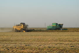 Soy harvesting by combines in the field. Agricultural machinery in operation.