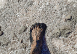 Human foot in the mud and salt lake brine. Therapeutic mud and salt.