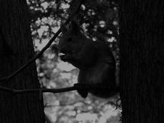 Squirrel on black and white photography