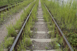 Railroad overgrown grass