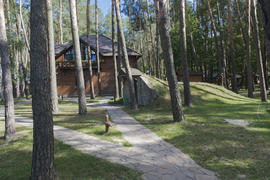 Wooden cabin in the pine forest in the summer