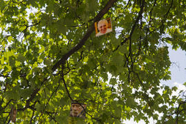 Photos hanging on a tree in the city of Lviv