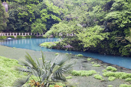 The blue river flows between thickets from palm trees and tropical trees
