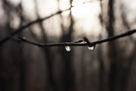 The drop after the settled fog reflects the surrounding wood in a branch