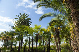 Palm trees grow in park on a bright sun of the South