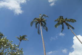 Palm trees by the sea look very beautifully, only bad protect from the sun