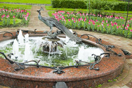 The beautiful fountain in an environment of the blossoming tulips