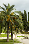 Palm trees and cypresses grow in the South and are pleasing to the eye beauty
