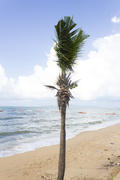 Palm trees grow on pleasure to the people having a rest and bathing ashore