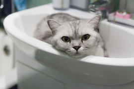 The gray cat in a sink lies and dreams of something