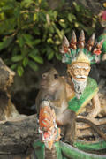 Monkeys in the Buddhist temple meet visitors and parishioners